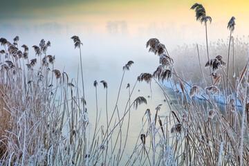 Zimowa Rzeka i Oszronione Trzciny