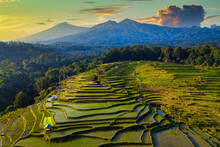 Aerial View Of Flooded Tropical Rice Fields In Rural Landscape, Mandalika, Lombok, West Nusa Tenggara, Indonesia