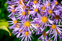 Delightful Purple Flowers In The Forest