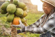 African Farmer Woman Working At Garden While Picking Up Papayas - Focus On Face