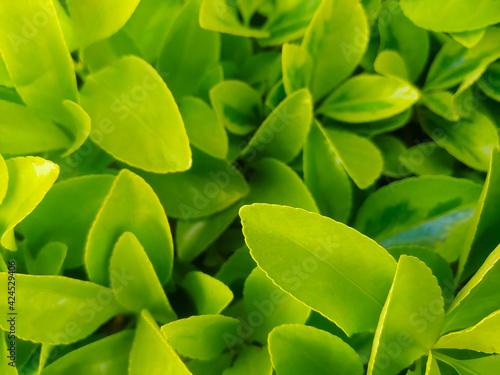 kwiaty macro rośliny natura płatki