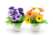 Two Flowering Plants In Pots. Gerbera Is Purple And Yellow. Piece Of Interior. Isolated On White Background