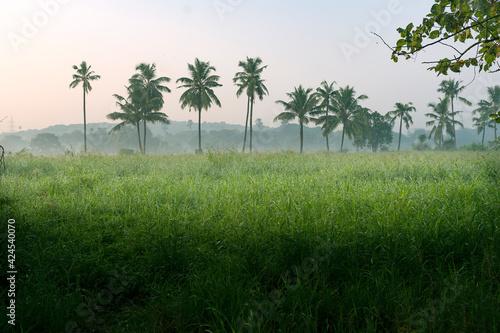 Aarey Colony 45 Fototapet