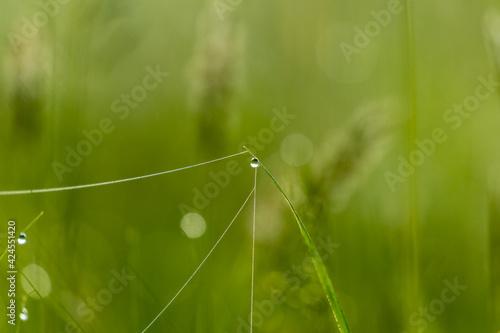 Fototapeta Łąka, pajęczyna i świt w Dolina Baryczy rezerwat przyrody Stawy Milickie obraz