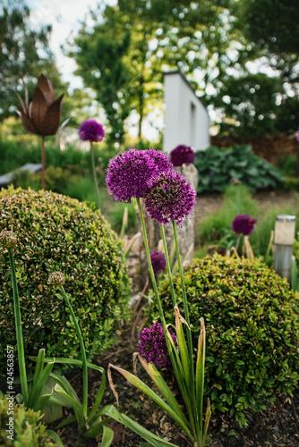 Fototapeta premium krajobrazowe, ogród ,drzewa, taras, roślina, trawa, zielony, pejzaż, krajobrazowy, trawnik, park, roślina, lato, piękny, wiosenny ogród, ogrodnictwo, bujny, ozdobny ,drzewa ,ląd uprawnych, krzew ,no