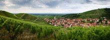 Summer View Between The Vines Of The Vineyard And The Bell Tower Of Katzenthal, Famous Winemaking Village In Alsace, Near Colmar And Keysersberg (France)