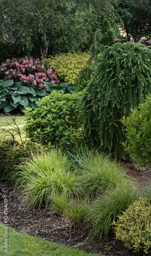 Fototapeta premium krajobrazowe ogród drzewa roślina trawa zielony pejzaż krajobrazowy trawnik park roślina lato piękny ogrodnictwo sprężyna bujny ozdobny drzewa ląd uprawnych krzew