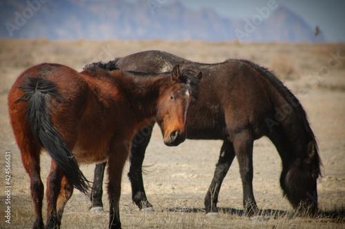 horse and foal Fotobehang