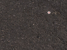 Asphalt Texture With Metal Cap From Bottle Crushed By The Cars That Pass On This Street. Graphite Color, Worn Asphalt.