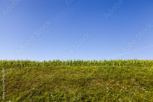 Fototapeta agricultural field with a crop, agricultural activity in Eastern Europe obraz
