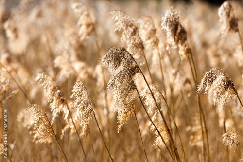 Canvastavla yellow dry grass