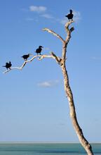 Un Grupo De Cormoranes Posados En Un Arbol Seco