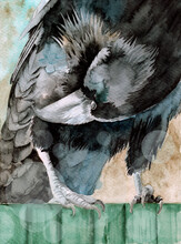 Watercolor Illustration Of A Black Raven Sitting On A Green Wooden Fence And Preening Its Feathers