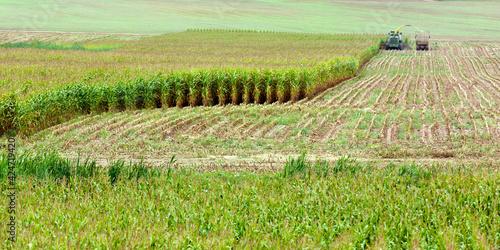 Photo a green cornfield