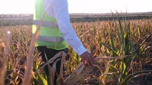 Agronomist Disappointed By The Corn Drought