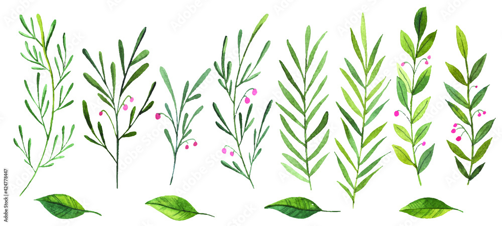 Fototapeta set of watercolor leaves, branches, botany, watercolor illustration on a white background