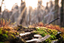 Close Up Of A Tree Trunk In The Forest Which Is Covered With Moss