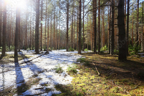 abstract seasonal landscape early spring in forest, sun rays and glare nature view