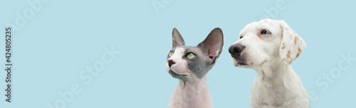 Foto Banner cute pets, dog and cat looking away with serious and attentive expression