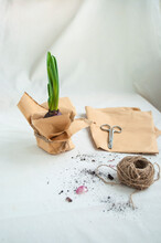 Home Gardening. Tools For Watering And Transplanting Of House Plants. Biodegradable Seed Starting Pots With A Hyacinthus.