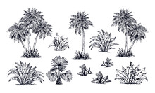 Palm Forest. Vector Drawing