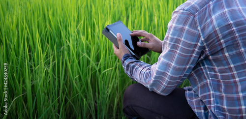 Fotografie, Obraz Rear view of Asian smart farmer using digital tablet outdoors in green organic rice paddy field