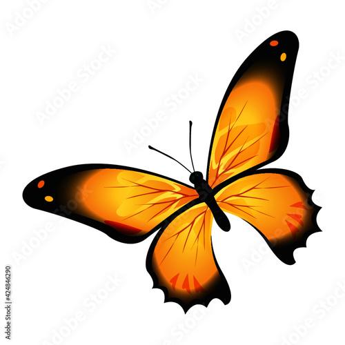 Canvas Mariposa de color hermosa de  primavera
