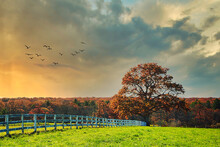 Autumn Sunset View Of A Lone Tree In The Countryside And A White Rail Fence