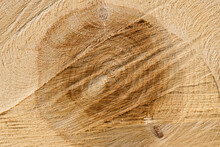 Detail Section Oak Tree Trunk, Cut Transversely, Showing The Age Of The Tree Rings And Cracks In Wood