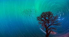 Silhouette Of Birds And Lone Tree With Northern Lights (Aurora Borealis)