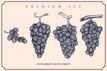 Engraved Illustration Of Grapes Vintage Set