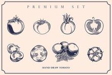 Engraved Illustration Of Tomato Vintage Set