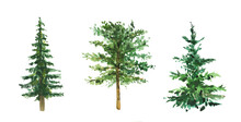 Watercolor Hand Painted Watercolor Aquarelle Pine Trees, Evergreen Trees Isolated On White. Ideal For Winter Cards, Merry Christmas, New Year Party Decoration. Book Botany Illustration.