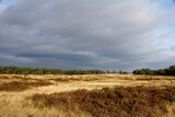 Trail in National Park Hoge Veluwe in the Netherlands