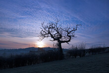 Spooky Dead Tree Silhouetting Against A Misty Dark Winter Sunset, The Cotswolds, Gloucestershire, UK