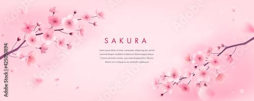 Fotografia Spring cherry blossom horizontal banner