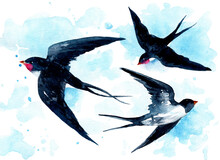 Watercolor Spring Illustration With Flying Swallows And Watercolor Spots