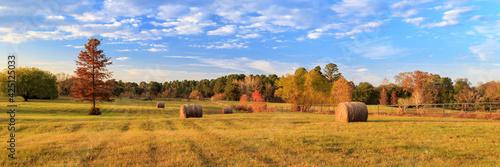 Fototapeta Hay Bales On The East Texas Landscape obraz