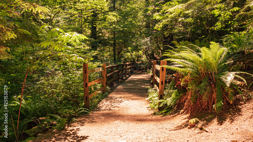 Obraz na plátne Sunlight highlights footbridge on shady Capilano Pacific forest trail in BC, Can