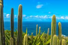 Cactus Overlooking Waters. Tropical Island Desert Plant