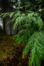 Mysterious Otzarreta Forest. Gorbea Natural Park, Basque Country, Spain
