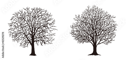 Photo 葉がない木 シルエット ベクター