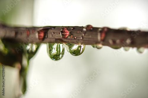 droplets 1