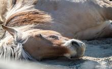Ein Pony Liegt Im Sand Und Schläft