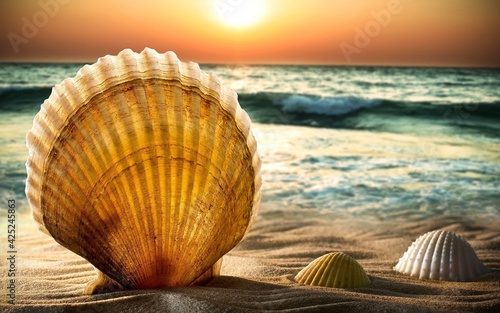 shell on the beach Fototapet