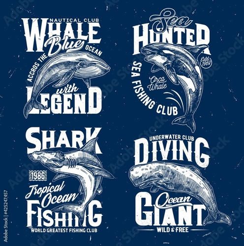 Fototapeta Trophy fishing and ocean diving club t-shirt print template. Blue whale, orca or killer whale and hammerhead shark, cachalot engraved vector. Clothing prints with ocean big mammal and marine predator obraz
