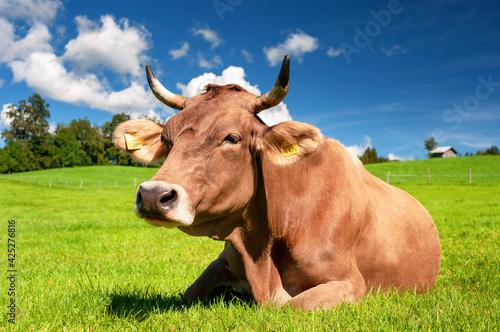 Fotografia, Obraz Cow on pasture in the Alps, Bavaria Germany
