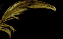 Golden Feathers Of A Rooster On A Black Background