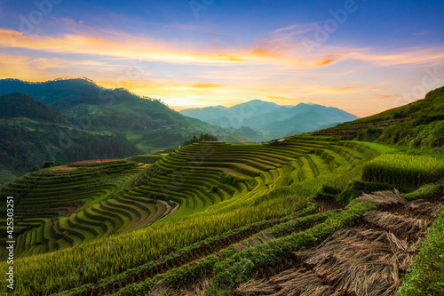 Obraz na plátně Terraced rice paddy field landscape of Mu Cang Chai
