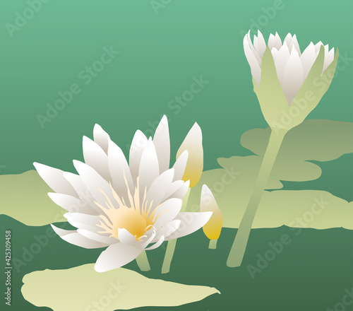 Obraz na plátně Vector illustration of white water lilies blossoming on lake surface